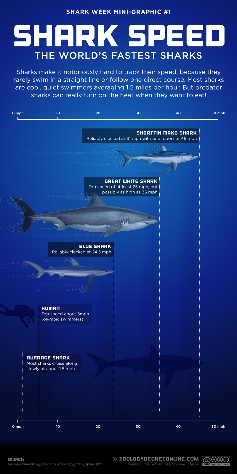 Shark Speed – The World's Fastest Sharks