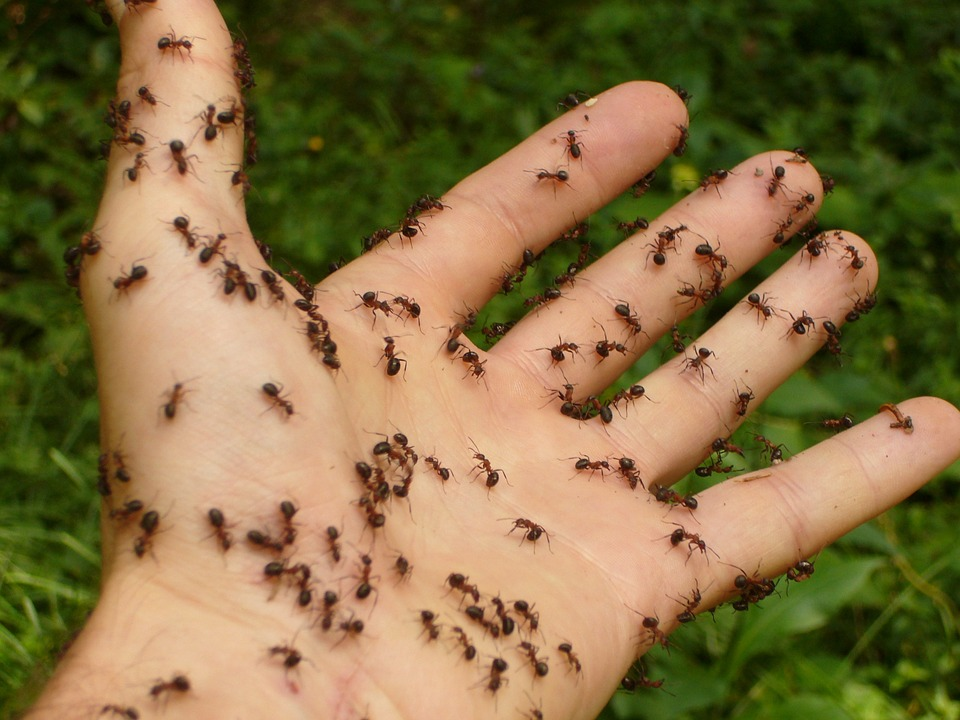 How to Keep Ants Away from your Bedroom